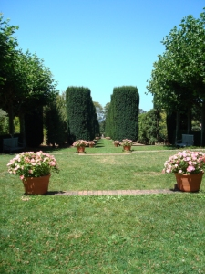 Yew Allee at Filoli