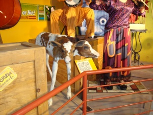 Two-Headed Calf at Ripley's in San Francisco