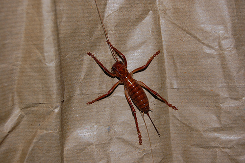 I didn't see this kind of bug in my room at Napa Discovery Inn. But then I was only in there for 5 minutes.